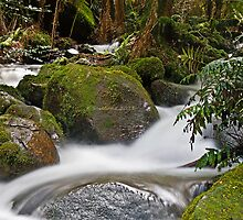 Rainforest gallery Warburton by bluetaipan