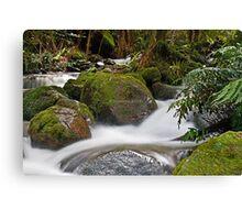 Rainforest gallery Warburton Canvas Print