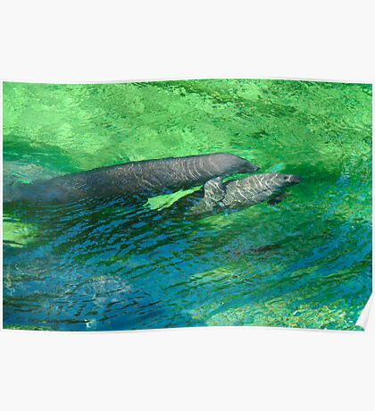 Manatee Family. Blue Spring S.P. Poster