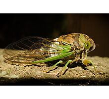 Green FLY Photographic Print