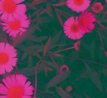 Japan memory - pink daisies Sticker