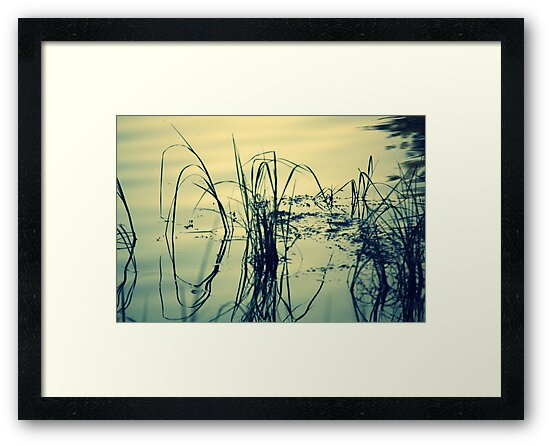 Reeds and Reflections in the Rainbow River by AuntDot