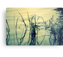Reeds and Reflections in the Rainbow River Metal Print