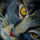 The Cat in Coloured Pencil by Diane McWhirter