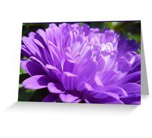 Vivid purple Greeting Card