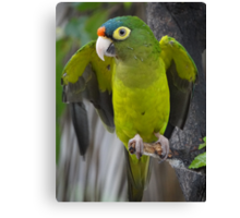 I'm An Ecologist - I'm Totally Green... - Soy Ecólogo - Soy Totalmente Verde Canvas Print