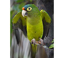 I'm An Ecologist - I'm Totally Green... - Soy Ecólogo - Soy Totalmente Verde Photographic Print