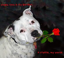 For the Love of Staffies by Elaine Teague