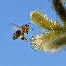 Bee in flight working hard by pixelnest