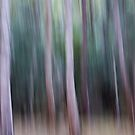 trees at west head by Jackie Cooper