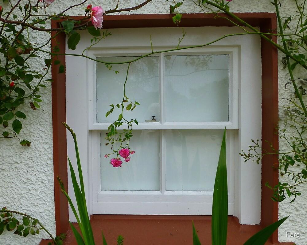 A Gallery Window by Fara