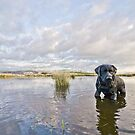 Black labrador, dramatic sky, reflections in water by Heather Buckley