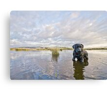 Black labrador, dramatic sky, reflections in water Canvas Print