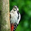 Woodpecker by Russell Couch