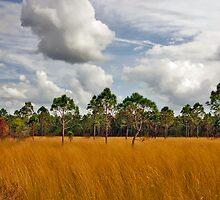 Sedgegrass & Pine. Three Lakes W.M.A. by chris kusik
