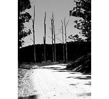 Gaunt Sentinels Photographic Print