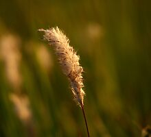 When The Light Hits The SOft Spot by Graeme M
