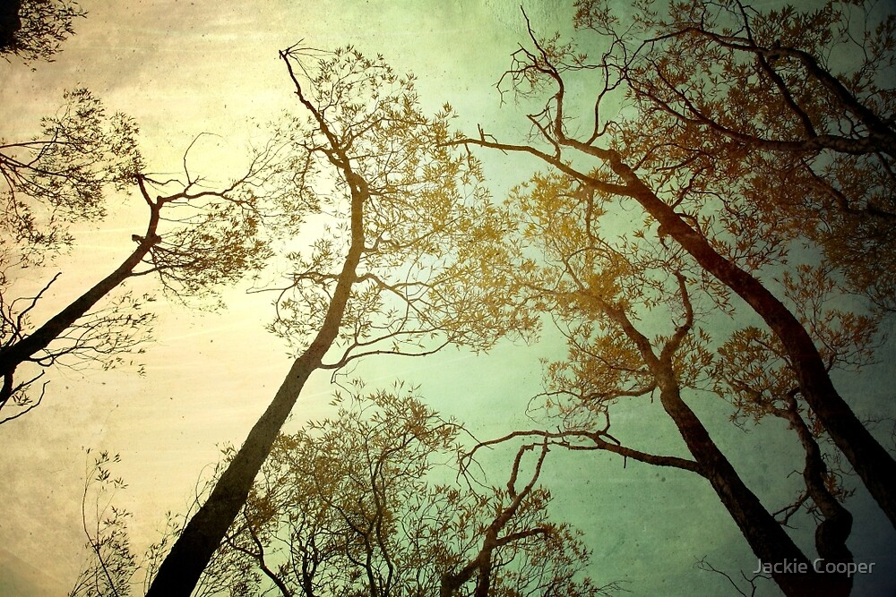 reaching up by Jackie Cooper