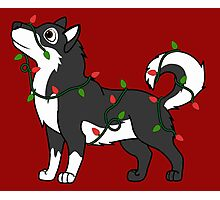 Black Alaskan Malamute with Red & Green Christmas Lights Photographic Print