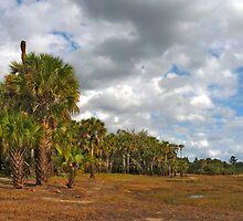 Palm Hammock. Econlockhatchee River S.F. by chris kusik