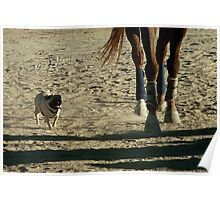 Beautiful Horse & Pug Photograph Poster
