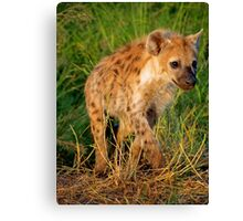 Young and curious Canvas Print