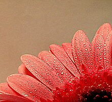 Diamond encrusted Petals. by Livvy Young