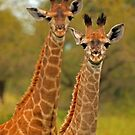 Too cute by Explorations Africa Dan MacKenzie