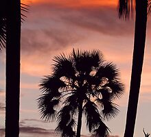 Swaying palms by Explorations Africa Dan MacKenzie
