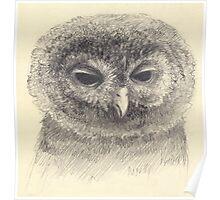 Do you like owls? Poster