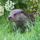 otter in the grass by brett watson