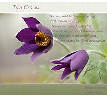Ode to Spring ~ Crocus Photographic Print