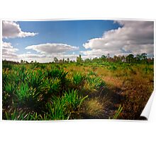 Palmetto Scrub. Triple N Ranch W.M.A. Poster