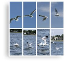 Seagull in Action Canvas Print