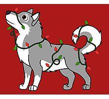 Gray Alaskan Malamute with Red & Green Christmas Lights Photographic Print