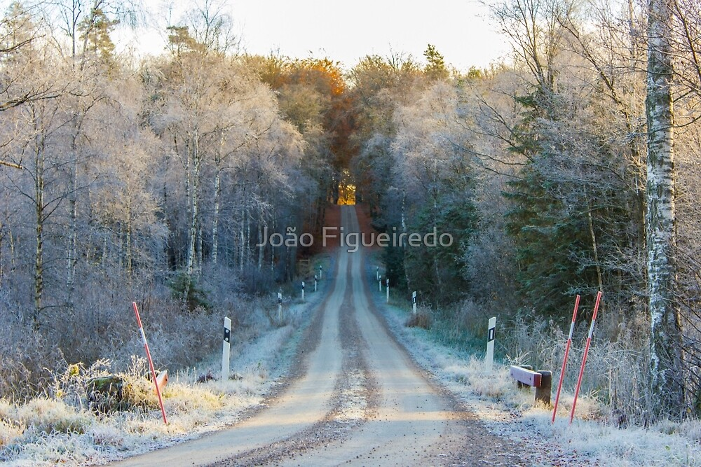 The border between Winter and Autumn by João Figueiredo