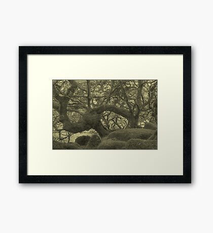 The Song of the Wind... Framed Print