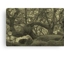 The Song of the Wind... Canvas Print