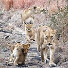Family Walk by Michael  Moss