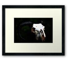 Ram Skull  Framed Print