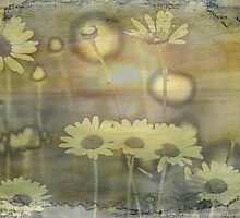 Daisy Shore by Vickie Emms
