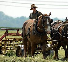 Amish farmer ploughs the field, Lancaster County. PA. by NGW01