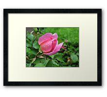 Rosebud Pretty Jessica Framed Print