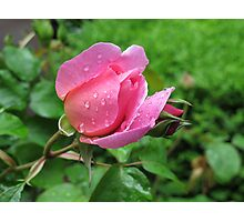 Rosebud Pretty Jessica Photographic Print