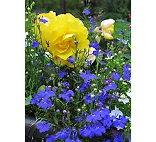 Blue and Gold Photographic Print