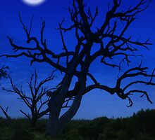 Moon Tree by Kevin McLeod