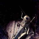 Texas Grasshopper  by melanie1313