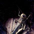 Texas Grasshopper  by melanie1313