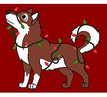 Red Alaskan Malamute with Red & Green Christmas Lights Photographic Print