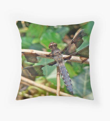 Common Whitetail Dragonfly - Plathemis lydia - Male Throw Pillow